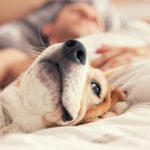 Are Your Allergies Worse at Night?Tips and Tricks for Nighttime Allergy Relief