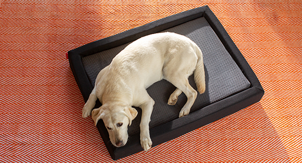 Layla® Pet Bed - Small Size - 2 in 1 Beds - Flippable Firmness - Durable & Machine Washable