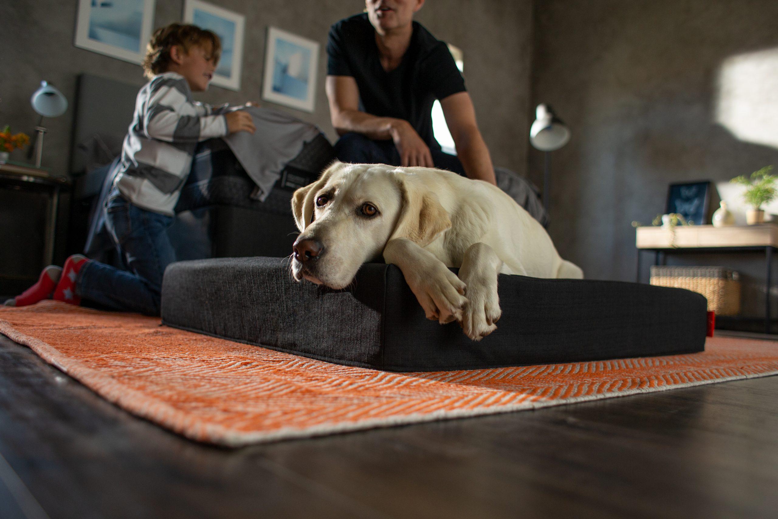 Memory Foam Pet Bed